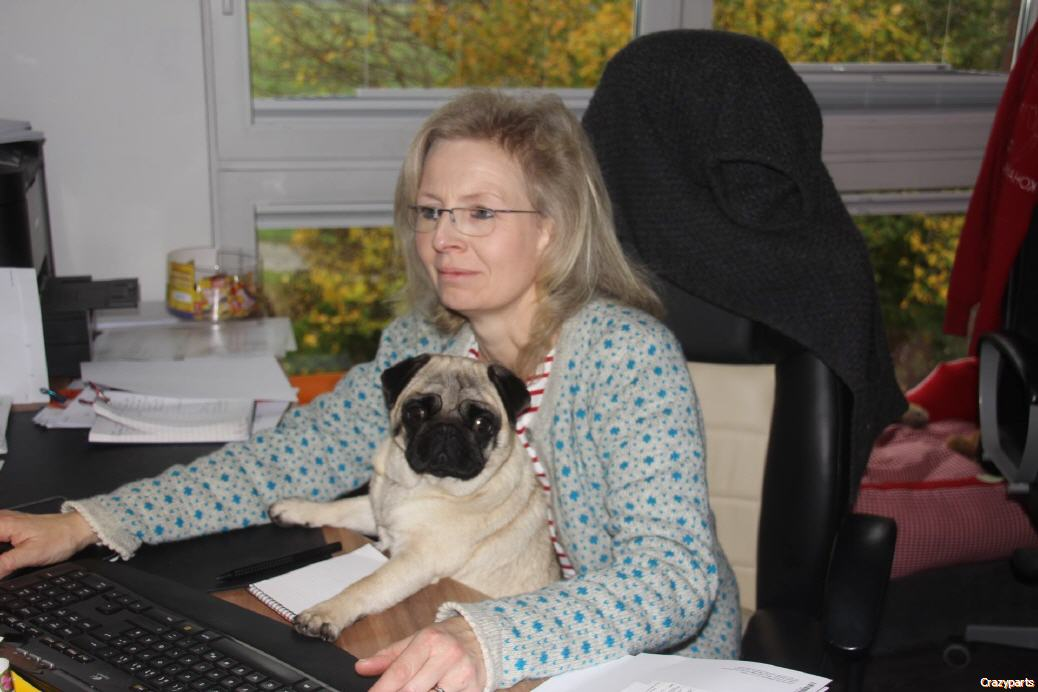 Nina...our Pug helping Barbara writing Invoices...